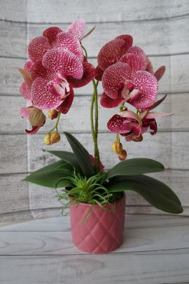 Интерьерная композиция Орхидеи в Stranamasterov.by Беларусь.
