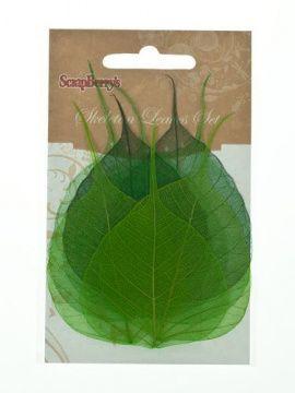 Скелетированные листочки из бананового дерева, зеленый, упаковка 8шт, SCB300508, SCRAPBERRY'S Россия.