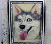 Картина из шерсти Хаски портрет в Stranamasterov.by