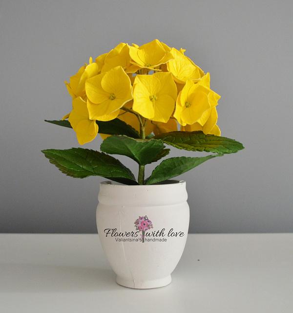 Цветы в горшке Гортензия миниветочка в Stranamasterov.by