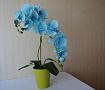 Интерьерная композиция Голубая орхидея в Stranamasterov.by