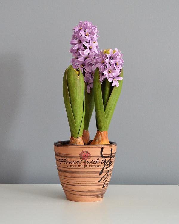 Цветы в горшке Гиацинт в Stranamasterov.by