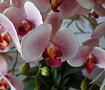 Интерьерная композиция Орхидеи в Stranamasterov.by