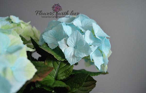 Цветы в горшке Гортензия голубая в Stranamasterov.by