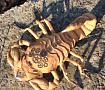 Текстильный Скорпион в Стиле стим панк в Stranamasterov.by